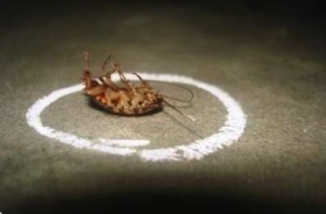 medidas-preventivas-cucarachas